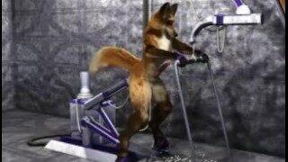 Taurin Fox Yiff Machine